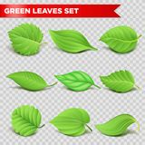 Green leaf 3d relaistic icons eco environment or bio ecology vector symbols Royalty Free Stock Images