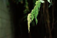 Green leaf. In the dark Stock Photo