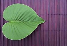 Green leaf on dark purple wood background Royalty Free Stock Image