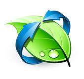 Green leaf design Royalty Free Stock Image