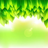 Green Leaf design Royalty Free Stock Photo