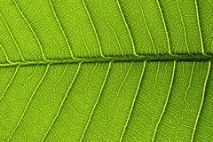 Green leaf details from a Stock Image