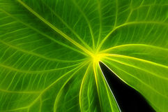 Green leaf Details Royalty Free Stock Photography