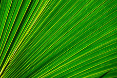 Green leaf 3 Royalty Free Stock Photo