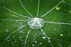 Green leaf with dew Stock Photo