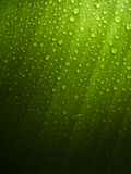 Green Leaf with Dew Drops. A fresh green leaf in drops of morning dew Stock Images