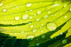 Green leaf with dew drops Stock Photos