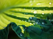 Green leaf with dew drops Stock Photo