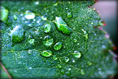 Green leaf with dew drops Stock Images