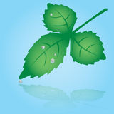Green leaf and dew  eps10. One green leaf and dew  eps10 Stock Images