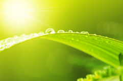 Green leaf with dews. In morning Stock Images