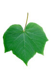 Green leaf diagram Royalty Free Stock Photo