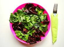 Green leaf diet concept with fresh Italian chicory. Radicchio is a leaf chicory ,Cichorium intybus, Asteraceae, sometimes known as Italian chicory and is a Royalty Free Stock Images