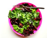 Green leaf diet concept with fresh Italian radicch. Radicchio is a leaf chicory ,Cichorium intybus, Asteraceae, sometimes known as Italian chicory and is a Royalty Free Stock Images