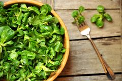 Green leaf diet concept with fresh valerian salad. Valerianella locusta is a small dicot annual plant of the family Caprifoliaceae that is an edible leaf Royalty Free Stock Images