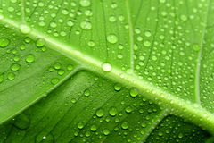 Green leaf and drop Stock Images