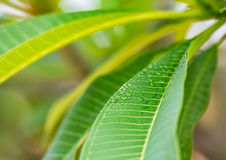 Green leaf with drop Stock Photo