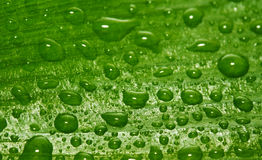 Green leaf with drops Stock Photo