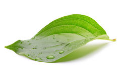 Green leaf with drops Royalty Free Stock Images