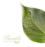 Green leaf with drops Royalty Free Stock Photos