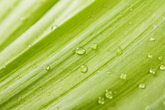 Green leaf with drops Stock Photos