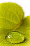 Green leaf with drops Royalty Free Stock Photo