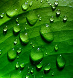 Green leaf with drops Royalty Free Stock Photography