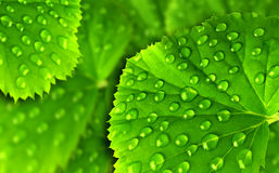 Green leaf with drops stock image