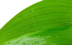 Green leaf with drops of dew Royalty Free Stock Photography