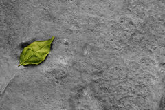 Green leaf drops on monotone gray dirt surface cement texture floor. With free copy space. Feeling blues and sadness lonely broken heart Stock Photos