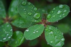 Green leaf with drops of water.  Stock Photo