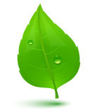 Green leaf with drops of water vector illustration