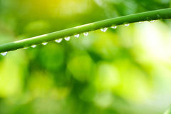 Green leaf with drops water. Stock Photos