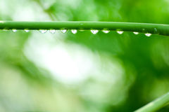 Green leaf with drops water. Green leaf with drops water Royalty Free Stock Photo