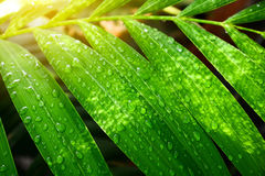 Green leaf with drops water. Green leaf with drops water Royalty Free Stock Photography