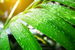 Green leaf with drops water. Royalty Free Stock Images
