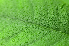 Green leaf with drops of water over it Stock Photography