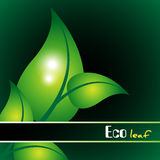 Green leaf eco background Stock Photography