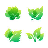 Green leaf eco design friendly nature elegance symbol and natural element ecology organic vector illustration. Royalty Free Stock Image