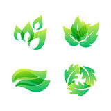 Green leaf eco design friendly nature elegance symbol and natural element ecology organic vector illustration. Stock Photo