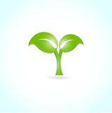 Green leaf. Ecological background Stock Photos