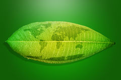 Green leaf environment concept save the earth. Stock Image