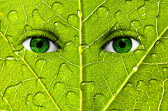 Green leaf eyes Stock Images