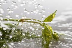 Green leaf. Stock Images