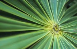 Green leaf fan Stock Image
