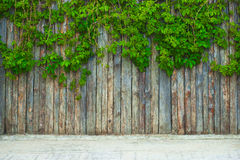 Green leaf on the fence royalty free stock photo