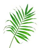 Green leaf of fern isolated Stock Images