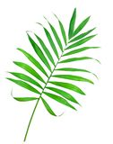 Green leaf of fern isolated on white Stock Photography