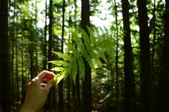 Green leaf of ferns in the woods. In hand Stock Images
