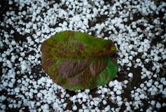 Green leaf on the first snow. Ngreen tree leaf on the first snow white Royalty Free Stock Photos